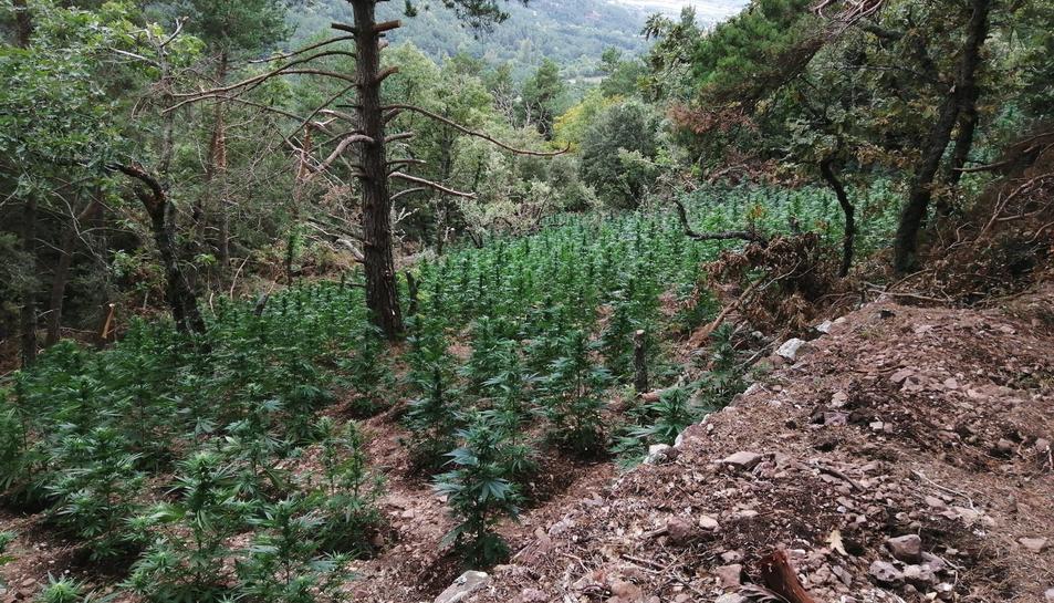 Imatge de la plantació localitzada.