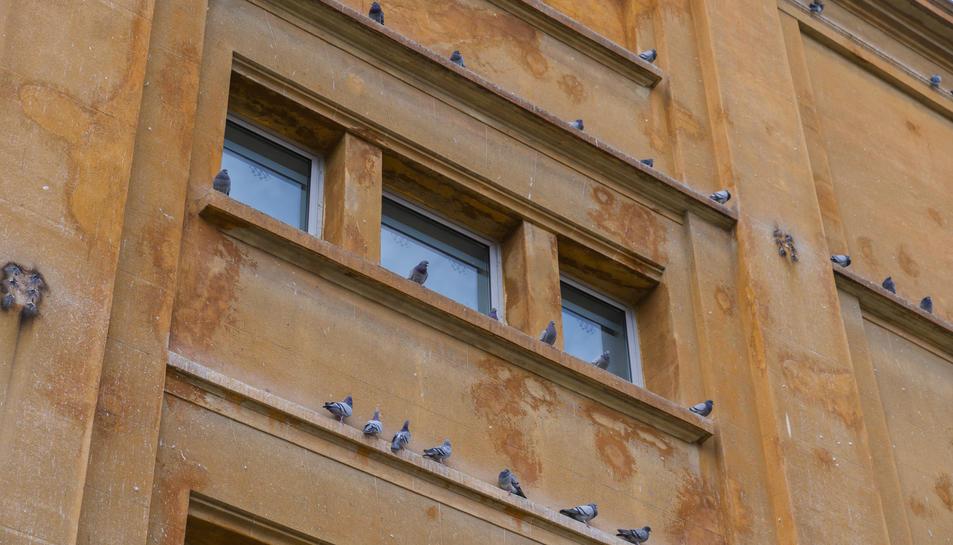 Imatge d'uns coloms a la ciutat de Tarragona