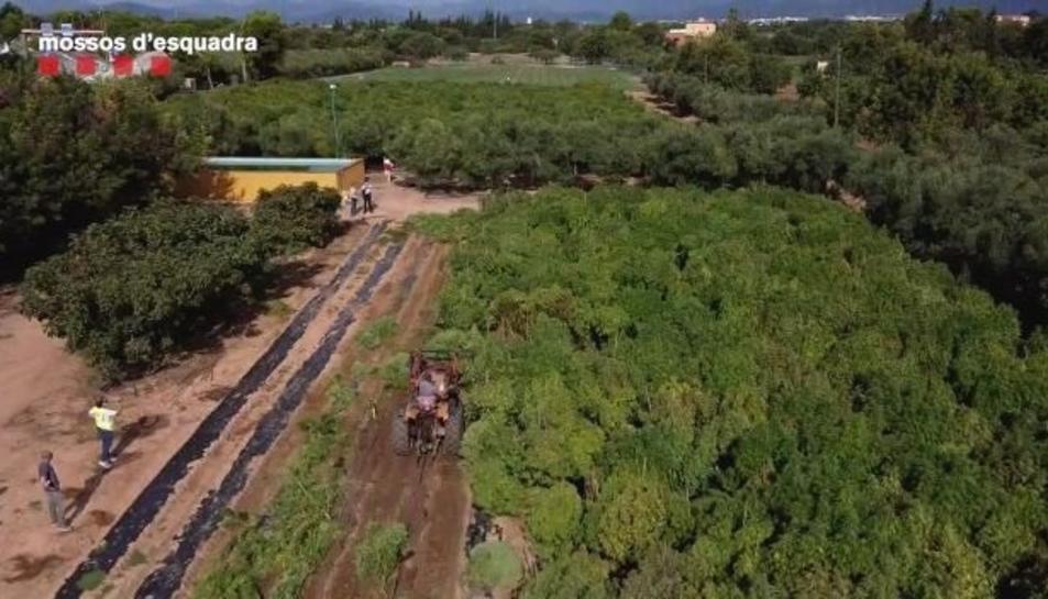 Desmantellen dues plantacions il·legals de cànem al Camp de Tarragona