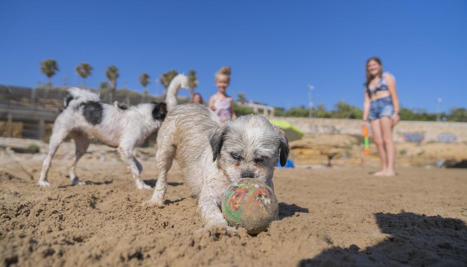 Imatge de l'espai per a gossos habilitat a la platja del Miracle.