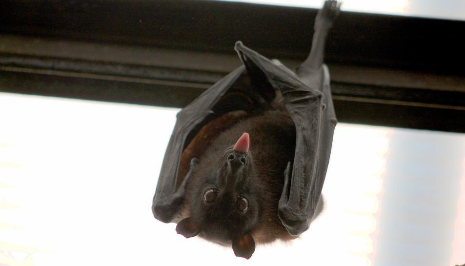 Imatge d'arxiu d'una ratapinyada.