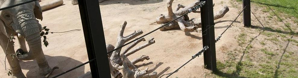 Imatge d'arxiu de dos elefants al Zoo de Barcelona.