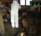 Los perros viven con su propietario y su madre, anciana, en malas condiciones.
