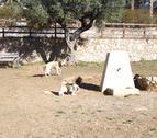 En todas las áreas de recreo se ha hecho uno cerrado y se han colocado papeleras, bancos, así como una fuente baja para que puedan beber los perros.