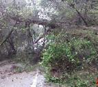 La circulación de la vía ha quedado cortada debido a la caída de un árbol.