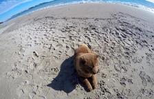 Calafell aprova que els gossos puguin accedir a les platges fora de temporada de bany
