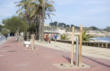 Apareixen arbres tallats per actes vandàlics al passeig Marítim