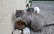 GAIA i Tarraco Gats esterilitzen 61 gats de la Part Alta en dos anys