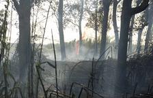 Un incendi a Sant Salvador crema quasi set hectàrees de vegetació
