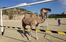I la tifa del camell va decidir