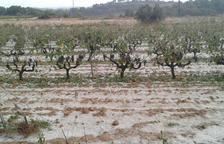Agricultura demana a l'asseguradora que periti les terres afectades per la calamarsada