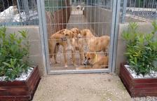 Un grup de gossos al Refugi Baix Camp, en una imatge d'arxiu.