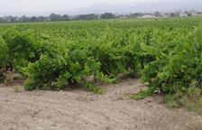 La guia francesa Gilbert & Gaillard premia 21 vins de la DO Terra Alta