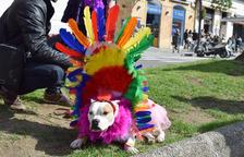 Desfilada de disfresses canines del segon concurs organitzat per l'associació Galgo112.