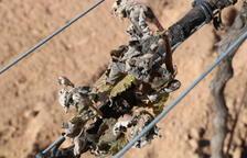 Una gelada inesperada afecta part de les vinyes d'Horta de Sant Joan