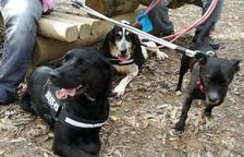 Una protectora de Calafell inicia una campanya de donacions per salvar a 11 gossos
