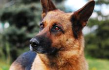Les autoritats el van detenir quan tornava a casa després d'enterrar el gos.
