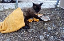 Vecinos del Vendrell reclaman que el consistorio recoja animales de la calle