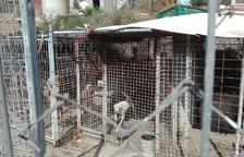 La última decena de animales de la perrera de Calafell se reubicará el sábado