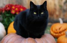 ¿Por qué las asociaciones no dan en adopción gatos negros en esta época?