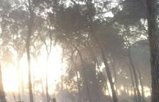 Un incendi crema vegetació a la zona del pinar del Mas de Mestres del Morell