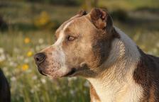 Afronta 18 meses de prisión por lanzar un perro moribundo en un contenedor de Jesús, en Tortosa