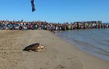 Liberan en el Delta del Ebro 14 tortugas babauas recuperadas