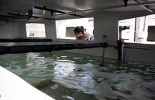 El IRTA aprovechará los subproductos de la industria cervecera para hacer piensos para la acuicultura