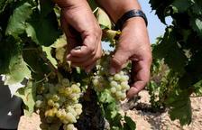 La Terra Alta es vesteix de gala per demostrar al món que és el «paradís vitivinícola de la garnatxa»