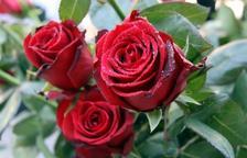 Llibres i roses prenen els carrers per Sant Jordi