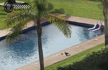 Salven un ànec i les seves cries d'una piscina a Cambrils