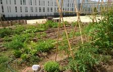 La AV Tarragona Centre quiere transformar solares vacíos en 1.000 m2 de huertos urbanos