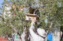 Reus centra 166 de les 242 actuacions per abelles a la comarca des del 2016