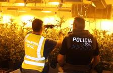 S'han intervingut 305 plantes de cànnabis sátiva amb un pes de 89 quilos, 1 quilo de marihuana i nombrosos útils i fertilitzants per facilitar el seu cultiu interior.