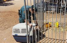 El propietari de la finca va declarar com a investigat per quatre presumptes delictes de maltractament animal.