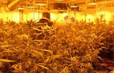 En total, se intervinieron 304 plantas de marihuana.
