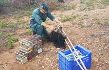 La Guardia Civil intervino varios ejemplares de jilgueros y pardillo.
