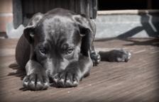 Segons el propietari, que és educador caní, «eren gossos del tot sociables».