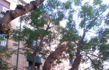 Una gran branca d'un arbre de la plaça del Pallol es trenca «per falta de poda»