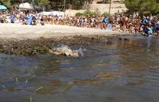 Cinc tortugues marines recuperades pel CRAM tornen al mar en un «emotiu» acte a l'Ametlla de Mar