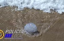 Imagen de una de las medusas aparecidas en la Cala Berenguer.