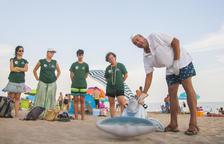 Forman voluntarios para atender a los delfines cuando se encallan en la playa