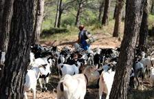 La Terra Alta vol ser subseu de l'Escola de Pastors de Rialp per fer-hi pràctiques i establir-hi els futurs cabrers