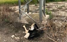 Imagen de una de las cigüeñas encontradas por los Agents Rurals al término de Amposta.