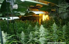Detienen a un padre y un hijo por tener una plantación de marihuana en el Catllar