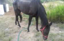 Un caballo de Vinyols i els Arcs da positivo en fiebre del Nilo occidental