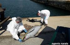 Un dofí de 2,08 metres ha aparegut mort al Port de Tarragona.