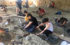 Localitzen noves restes de mamut i eines de fa un milió d'anys al Barranc de la Boella