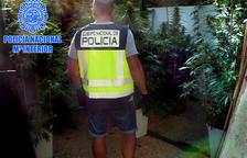 Un agente de la policía española en el desmantelamiento de una plantación de marihuana en Tortosa.