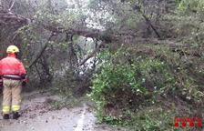 La circulació de la via ha quedat tallada degut a la caiguda d'un arbre.